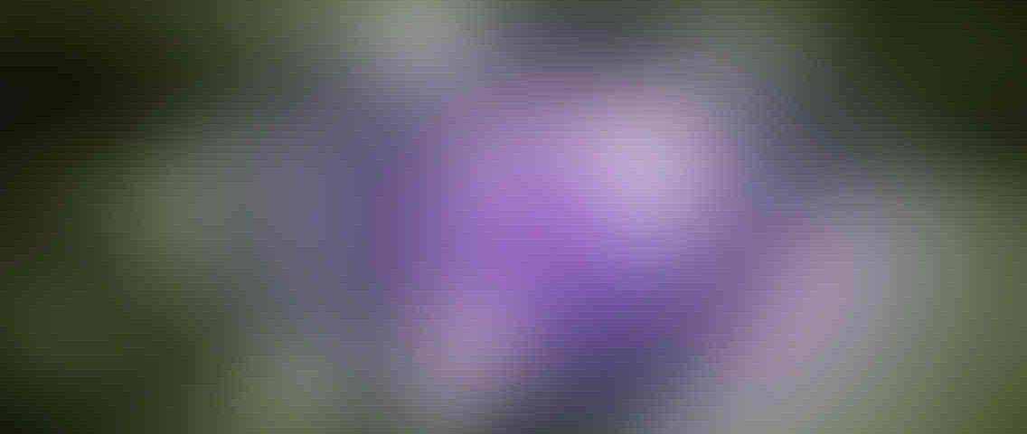 http://gozdefidan.com/wp-content/uploads/2013/03/standout_slide_3_v01-1136x480.jpg